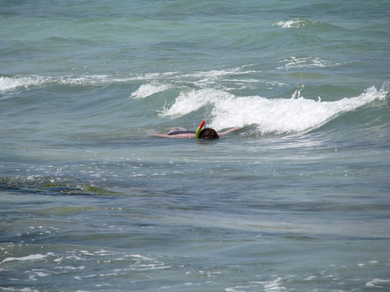 Snorkeling At Point Of Rocks Beach Siesta Key Florida